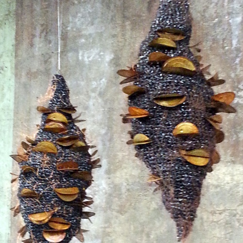Which banksia?